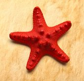Sea Star On Textured Background