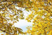 Autumn foliage at sunny day