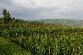 Crops On Farmland