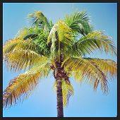 Closeup Instagram Of Palm Tree Swayingin The Wind With Frame