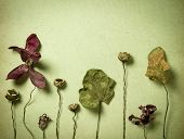 picture of dead plant  - postcard style wallpaper of old vintage paper with dry plants - JPG
