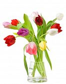 Tulips in the vase