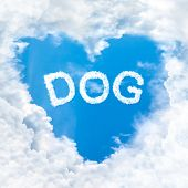 Love Dog Word Cloud Blue Sky Background Only