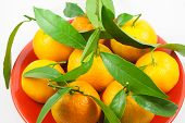 Orange Mandarines - Clementines - Tangerines Heap In Plate On White Background