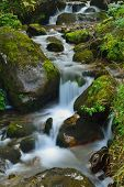 mountain forest landscape creek with fresh water