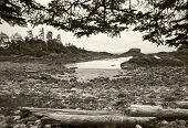 Landscape In Vancouver Island. British Columbia. Canada