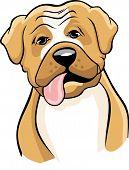 Boxer Cartoon 2