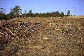stock photo of deforestation  - Deforestation scene - JPG