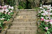 stock photo of stepping stones  - Stone garden steps with flower - JPG