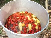 picture of crawfish  - A boiling pot of crawfish corn potatoes and seasoning being cooked outdoors in a large kettle - JPG