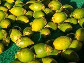 foto of stall  - Fruits  - JPG