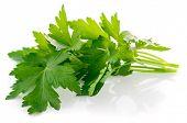 pic of greenery  - Bunch fresh parsley - JPG