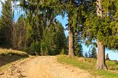 stock photo of pieniny  - path in the mountains - JPG