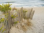 Dunes And Fence
