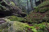 stock photo of hollow  - The ancient forests of the Conkles Hollow area of Hocking Hills State Park - JPG