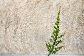 stock photo of creeper  - creeper on the wall for background or texture - JPG