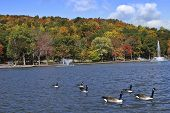 colorful autumn foliage and wildlife