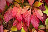 Colourful Autumn Leafs
