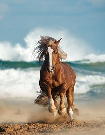 picture of wild horse running  - Wild chesnut draft horse running gallop by the sea - JPG
