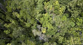 image of canopy  - Top down view of the canopy of Daintree Rainforest in Cairns - JPG