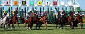 MAYS LANDING, NJ - 23 de abril: Os cavalos quebram do portão, um belo dia 23 de abril de 2009 em maio