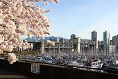 Vancouver Spring, British Columbia, Canada