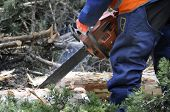 foto of chainsaw  - Forester Using Chainsaw To Slice The Tree - JPG