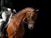 caballo Bahía aislada en negro