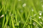 Closeup of morning dew drops on the green grass #2