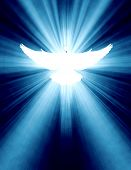 picture of pentecostal  - shining dove with rays on a dark golden background - JPG