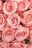 Background Of Pink And Peach Roses. Fresh Pink Roses. A Huge Bouquet Of Flowers. The Best Gift For W poster