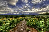 Path to Grand Tetons