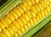 Maize2