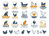 Chicken Badges. Fresh Farm Food Logotype Cooking Egg And Bird Broilers Vector Labels. Chicken Egg An poster