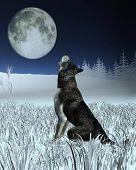 image of wolf moon  - Lone wolf in a winter landscape - JPG