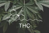 Thc Formula, Tetrahydrocannabinol . Cannabinoids And Health, Hemp Industry, Cbd And Thc Elements In  poster