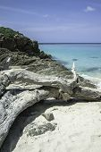 Blue Sea Bay. Azure Transparent Sea Water. White Sand Beach And Old Fallen Tree. Thailand. Andaman S poster