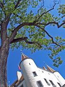 Nyon Castle And Tree