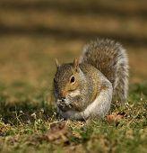 Scheming Squirrel