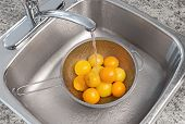 Washing Yellow Tomatoes