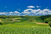 Beautiful Green Agricultural Landscape In Croatia
