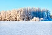 Winter Forest On A Bright Sunny Day