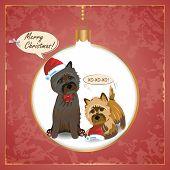 Cairn Christmas Card