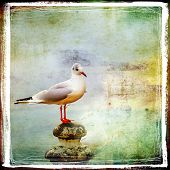 stock photo of albatross  - sea gull - JPG