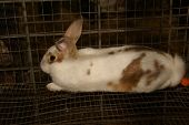 pic of peter cottontail  - Brown and White Rabbit Resting in a Wire Cage - JPG