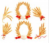 Big collection with Ears of wheat. Vector illustration.