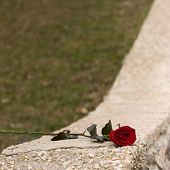 Red Rose And Kerb