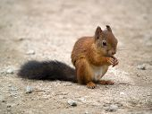 Squirrel Waiting