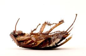 stock photo of pest control  - Dead brown cockroach lying upside - JPG