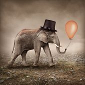 Elephant with a orange balloon